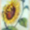 Virágos szatyrok (1)