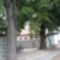 a vén bodaki hársfák 2011. nyár