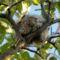 -házkörül madárfészek-