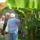 Székely Lázárék kertje