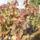 Őszi szinek Lesencén