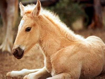 lovas kép 15
