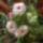 kertész klub