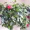 Kínai rózsám