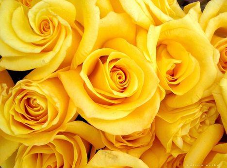 A citromsárga szín jelentései: bölcsesség-ostobaság
