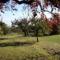 Gyümölcsöskert  -  késő ősszel