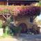 Muskátlis öreg ház