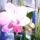Phalaenopsis_cacharel_1288602_3551_t