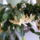 Kaktuszom_1289552_9497_t