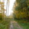Kisbodak, a Pállfy-szigetet átszelő erdei út, 2011. október 30.-án