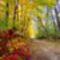 őszi erdő Nyírség