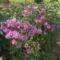 2008 Virágaim