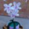 Egy újabb orchidea