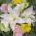 Julika virágai