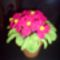 Rózsaszín  fokföldi