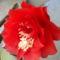 kardkaktusz virága nov.6-án