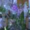orchidea kiállítás 2011. nov.05. 039