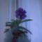 orchidea kiállítás 2011. nov.05. 056