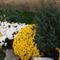 Őszi virágok 29