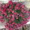 Őszi virágok 30