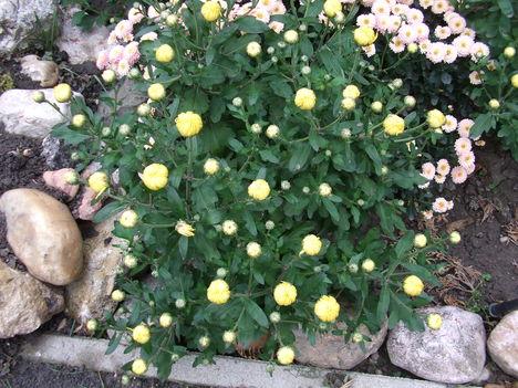Őszi virágok 31