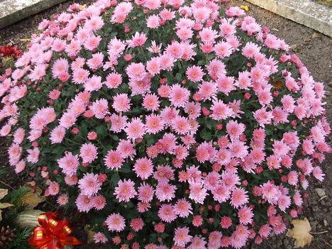 Őszi virágok 32