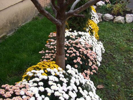 Őszi virágok 33