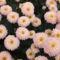Őszi virágok 9