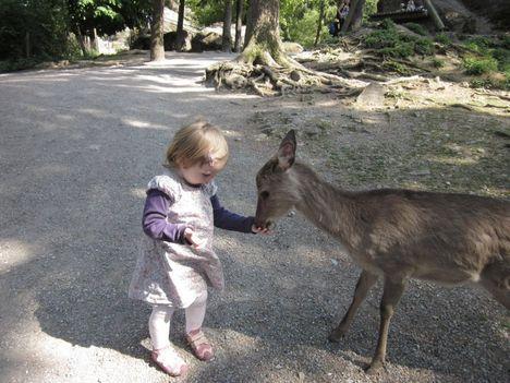 barátkozás az állatkertben 2