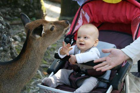 ismerkedés allatkertben