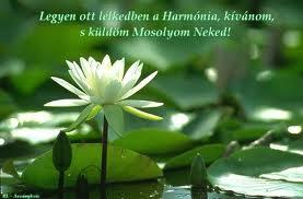 A nyugalom virága