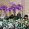 Orchidea kiállítás2011.11.04