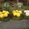 5 virágosok