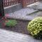 novemberben a pipacs is virágzik nálam