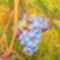 Novemberi szőlőjárás 9
