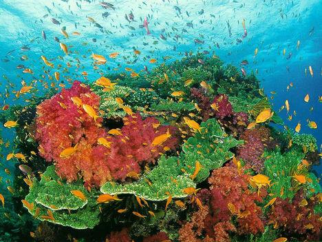 A csodálatos korall-élet