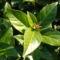 A téli bangita is most hozza virágait