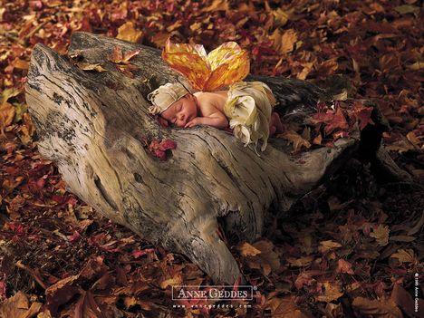 Egy álomszuszék lepke - Anne Geddes
