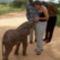 Elefántsimi
