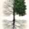 ilyen a fa