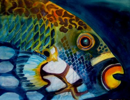 Papagájhal - festmény