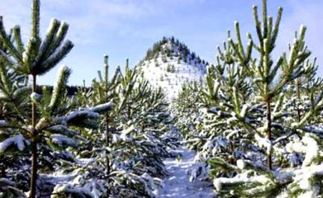 téli kép a befásított hegyről