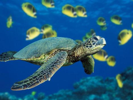 Tengeri teknős