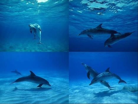Delfinek 3.