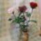 hosszúszárú rózsák