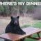 hozhatnák már az ebédem...