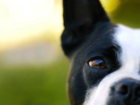 kutya 2