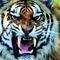 Mérges Tigris
