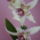 unokám lányom virágkép 163