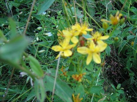 lepkék és virágok 12